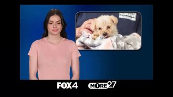 American Humane TV Spot, 'Family' Featuring Ariel Winter - Thumbnail 1