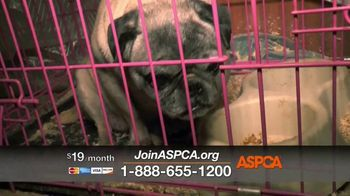 ASPCA TV Spot, 'Rescue Footage' - Thumbnail 8