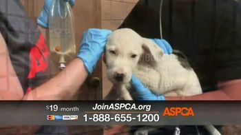 ASPCA TV Spot, 'Rescue Footage' - Thumbnail 6