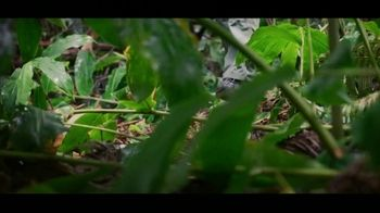 Citizen Watch Promaster TV Spot, 'Go Beyond: Rain Forest ' - Thumbnail 1