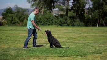 Animal Behavior College TV Spot, 'Certification' - Thumbnail 8
