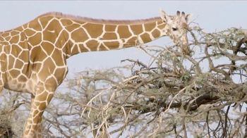 San Diego Zoo TV Spot, 'Giraffes on the Endangered Species List'