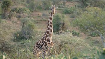 San Diego Zoo TV Spot, 'Giraffes on the Endangered Species List' - Thumbnail 3