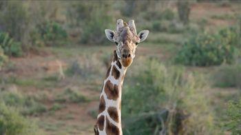 San Diego Zoo TV Spot, 'Giraffes on the Endangered Species List' - Thumbnail 4