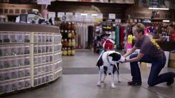 Vetericyn Animal Wellness Foam Care Shamooo TV Spot, 'Whiplash the Cowboy Monkey Goes to Teskey's' - Thumbnail 6