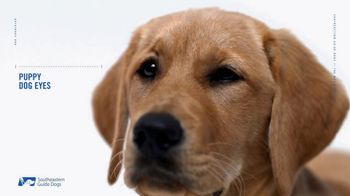 Southeastern Guide Dogs TV Spot, 'Anatomy of a Superhero: Moxie'
