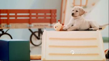 Southeastern Guide Dogs TV Spot, 'One Lucky Puppy: Sponsor a Puppy for $19 a Month'