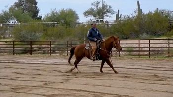 Zesterra TV Spot, 'Your Horse's Health'