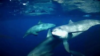 SeaWorld TV Spot, 'The World We All Share' - Thumbnail 2