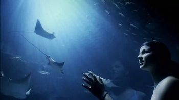SeaWorld TV Spot, 'The World We All Share' - Thumbnail 9