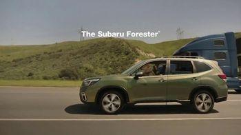 Subaru Forester TV Spot, 'Dog Tested: Honk' [T2] - Thumbnail 8