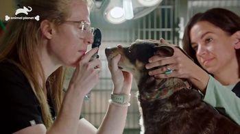 Subaru TV Spot, 'Animal Planet: Pet Helpers' [T1] - Thumbnail 3
