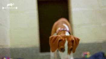 Subaru TV Spot, 'Animal Planet: Pet Helpers' [T1] - Thumbnail 7