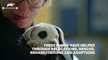 Subaru TV Spot, 'Animal Planet: Pet Helpers' [T1] - Thumbnail 9