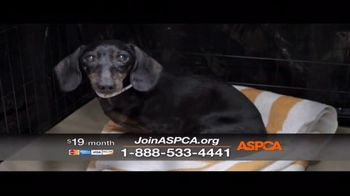 ASPCA TV Spot, 'The Next Minute' - Thumbnail 9