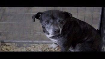 ASPCA TV Spot, 'The Next Minute' - Thumbnail 3