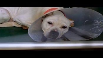 ASPCA TV Spot, 'The Next Minute' - Thumbnail 4