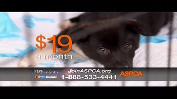 ASPCA TV Spot, 'The Next Minute' - Thumbnail 5