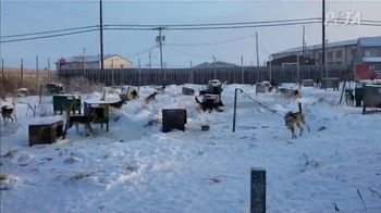 PETA TV Spot, 'The Iditarod' - Thumbnail 1