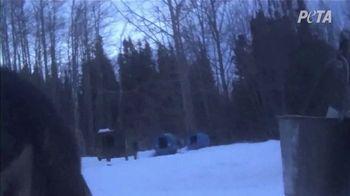 PETA TV Spot, 'The Iditarod' - Thumbnail 4