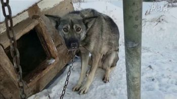 PETA TV Spot, 'The Iditarod' - Thumbnail 5