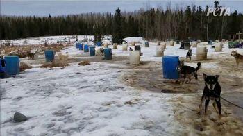 PETA TV Spot, 'The Iditarod' - Thumbnail 7