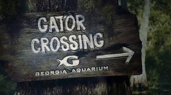 Georgia Aquarium TV Spot, 'Gator Crossing' - Thumbnail 1