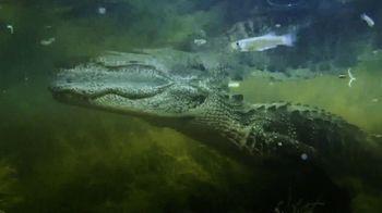 Georgia Aquarium TV Spot, 'Gator Crossing' - Thumbnail 2
