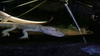 Georgia Aquarium TV Spot, 'Gator Crossing' - Thumbnail 3