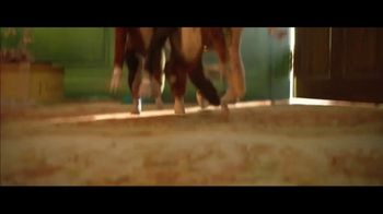 Cats - Alternate Trailer 49
