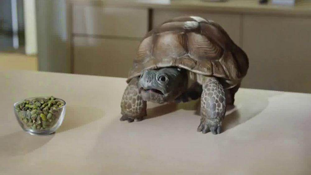 Wonderful Pistachios TV Commercial, 'I Speak Turtle'