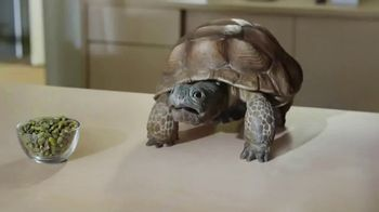 Wonderful Pistachios TV Spot, 'I Speak Turtle'