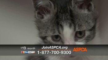 ASPCA TV Spot, 'Season of Giving: Last Chance' Song by Susan Boyle - Thumbnail 9
