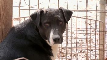 ASPCA TV Spot, 'Season of Giving: Last Chance' Song by Susan Boyle - Thumbnail 1