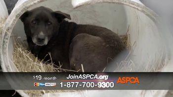 ASPCA TV Spot, 'Season of Giving: Last Chance' Song by Susan Boyle - Thumbnail 3