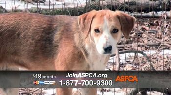 ASPCA TV Spot, 'Season of Giving: Last Chance' Song by Susan Boyle - Thumbnail 4