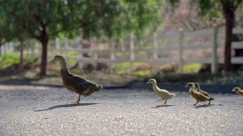Hyundai Spring Sales Event TV Spot, 'Duck Crossing' [T2] - Thumbnail 1