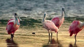 The Beaches of Fort Myers and Sanibel TV Spot, 'Islandology' - Thumbnail 7