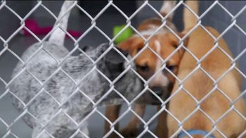 Clear the Shelters TV Spot, 'NBC: Resources' - Thumbnail 1
