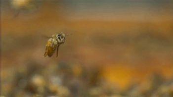 Amazon TV Spot, 'Desert Creek Honey' - Thumbnail 7
