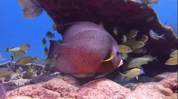 The Florida Keys & Key West TV Spot, 'Diving: Beyond Your Imagination' - Thumbnail 2