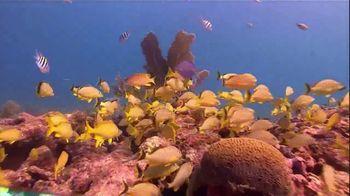The Florida Keys & Key West TV Spot, 'Diving: Beyond Your Imagination' - Thumbnail 3