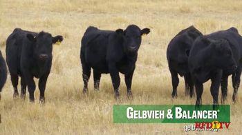 American Gelbvieh Association TV Spot, 'Crossbreeding' - Thumbnail 2