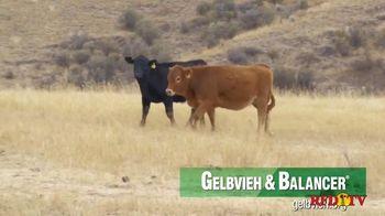 American Gelbvieh Association TV Spot, 'Crossbreeding' - Thumbnail 3