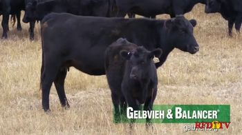 American Gelbvieh Association TV Spot, 'Crossbreeding' - Thumbnail 4