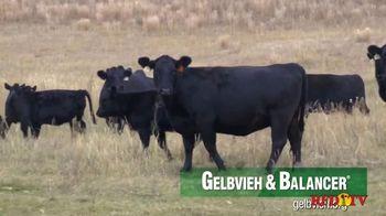 American Gelbvieh Association TV Spot, 'Crossbreeding' - Thumbnail 5