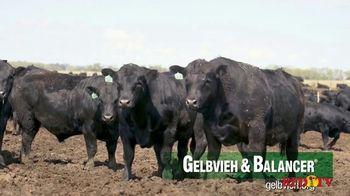 American Gelbvieh Association TV Spot, 'Crossbreeding' - Thumbnail 7