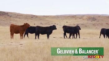 American Gelbvieh Association TV Spot, 'Crossbreeding' - Thumbnail 8