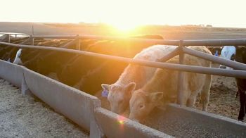 Pro Earth Animal Health Cattle Active Lick Tubs TV Spot, 'Solutions' - Thumbnail 1
