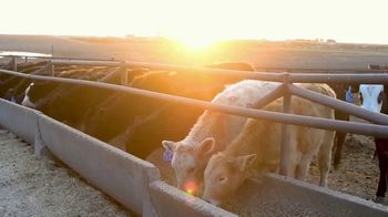 Pro Earth Animal Health Cattle Active Lick Tubs TV Spot, 'Solutions' - Thumbnail 2